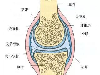 膝关节滑膜炎