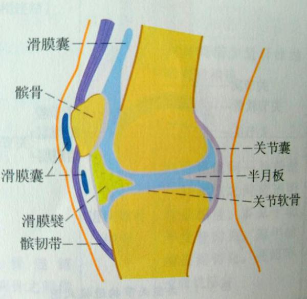 膝关节滑囊炎