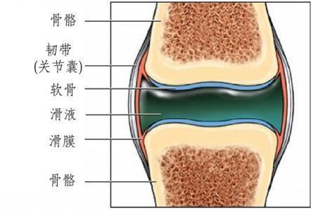 膝关节构造图