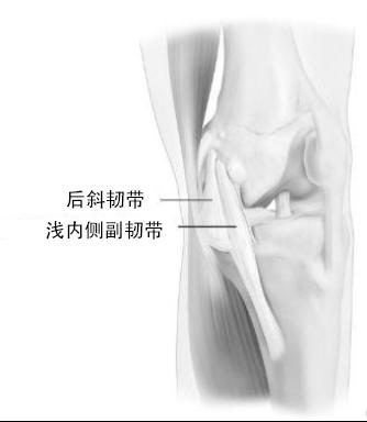 膝关节韧带图片