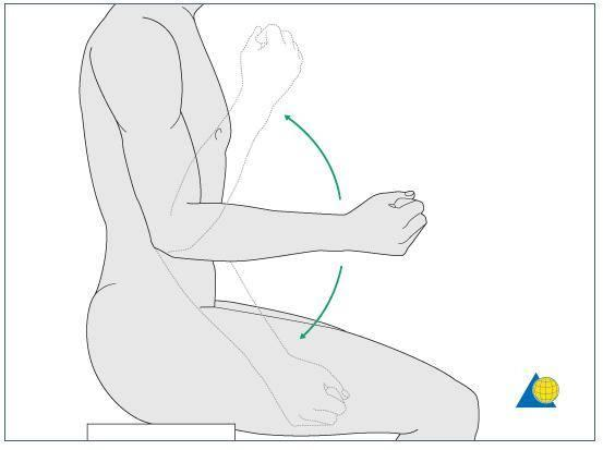 肘关节屈伸